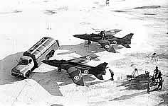 Two Finnish Gnats on the ground